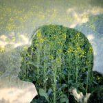 De la fille de la campagne à la fleur de colza