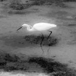 Du randonneur à Melenn, oiseau de mer