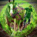 Des habitants au dernier cheval
